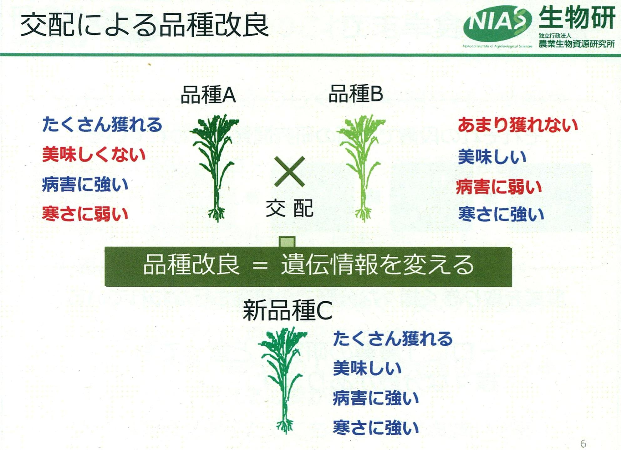 稲 交配による品質改良